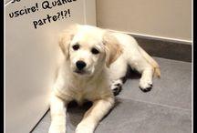La dieta di Zoy / Una nuova arrivata in casa Pet's Planet: si tratta di Zoy, la bellissima golden retriever di Luca!
