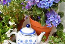 Tea / enjoying tea