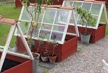 Växthus mm❤️