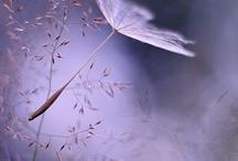 Lila -Lila - Lilac / by Delia Padilla Wenneker