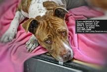 DEATH ROW ANIMALS NEED 2 be SAVED NOW!!!! / by Darlene-Joe Burke