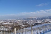 Monferrato - Piedmont