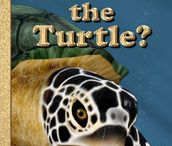 Everything About Turtles / Educating children about Turtles