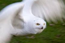 Animal pics / by Tina Harris Cooley