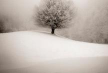 Tree photographs / by Joanna McDaniel