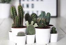 Cactus n succulent