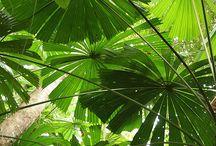 orman ve bitkiler