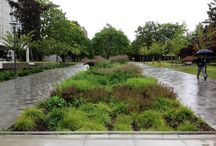 (S)Rain garden