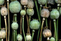 semillas / fotografia