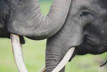 elephantsss / by Julia Mumm