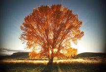 nature is beautiful / by Miranda Miller