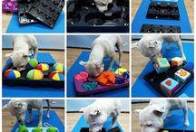 Hond activiteiten