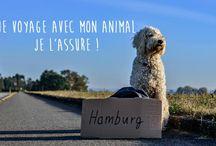 Conseils animaux