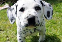 puppy love (for my kids) / by Felicia Garrett