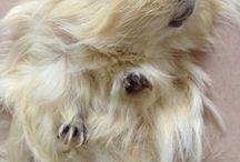 guinea pigs ❤