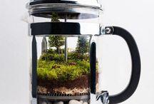 mini garden in glas