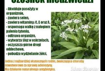 przyprawy / zioła