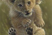 картинки животные