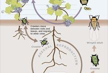Pests & Disease