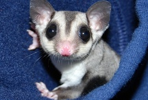 Cuties / Pets I adore and covet