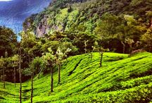 On a trip to Coonoor