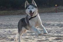 Animales y mascotas kawwais / Fotos y gift de los animales más tiernos y mas traviesos :3