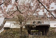 Cherry Blossoms at Wakayama Castle in Japan. / oday was a fine spring day and I ventured out ti the City of Wakayama to enjoy the cherry blossoms there. I was not disappointed, they where basically in full bloom and my revellers had come to enjoy it! Historical insight: Wakayama Castle (和歌山城) in Wakayama Prefecture, Japan, sits at the mouth of the Kii River. Originally Ōta castle, home of the Saiga Ikki, it was captured by Toyotomi Hideyoshi in 1585, during the Siege of Negoro-ji; (根来寺の戦い ).