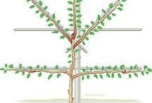 fruit trees na parede