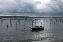 Bassin arcachon