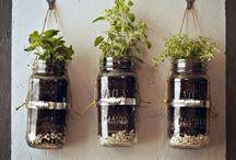 Gardening/ 'erbs / by Chantel Dickerson