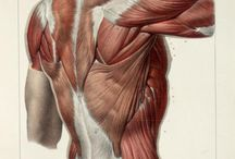 Human Anatomy References for Artists