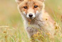Cuties / I love animals