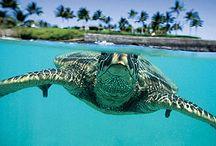 Tortugas / Mis favoritas