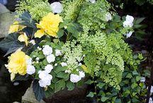 Container gardens / by Donna Melcher