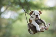 Too cute! / by Kathy Scheibel
