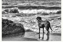 Black and White Photography by Vandra / A collection of black & white photographs by Vandra Designs