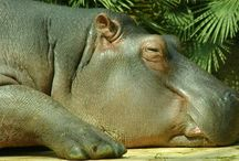 Kohli - Tiere (meist Zootiere)