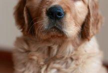 Animais - Cachorros / Apenas cachorros!