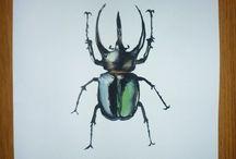 Love my bugs / by Kimberly Lowry