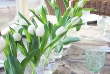 Tulipaner i glas