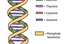 Dnasequencing