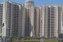 Apartment for rent in DLF Summit Gurgaon