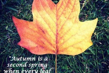 Autumn / by Enchanted Garden