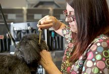 Vaughn Road Grooming Services / The Vaughn Road Veterinary Clinic offers professional pet grooming services for the ultimate in skin and coat care.