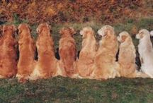 dogss ♥♥♥♥♥♥♥