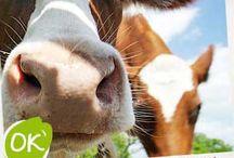 Biologische slagerijen / Waar kun je goed biologisch vlees kopen?