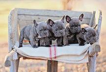 Puppy loooove