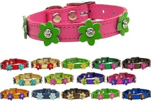 Leather Dog Collars / We are a leading online provider of fashionable leather dog collars for canine enthusiasts everywhere. Our extensive line of dog collars for male and female dogs are available in a full range of sizes from extra small to extra extra large, and come in a tremendous variety of styles and colors.