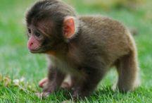BebeS / Cute baby animals
