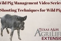 """How To"" Feral Hog Mgmt. Videos / Watch to learn how to trap, shoot and snare wild pigs."